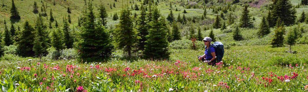 Alpine Meadows in Jasper National Park