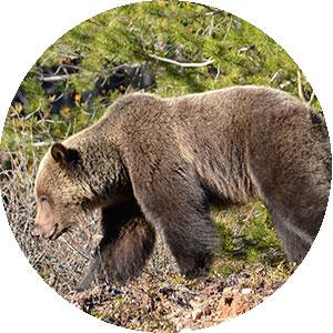 nature talks in Jasper National Park