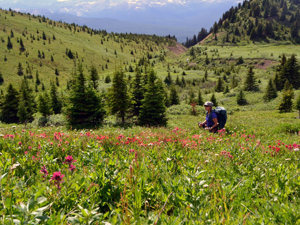 hiker-in-flowers